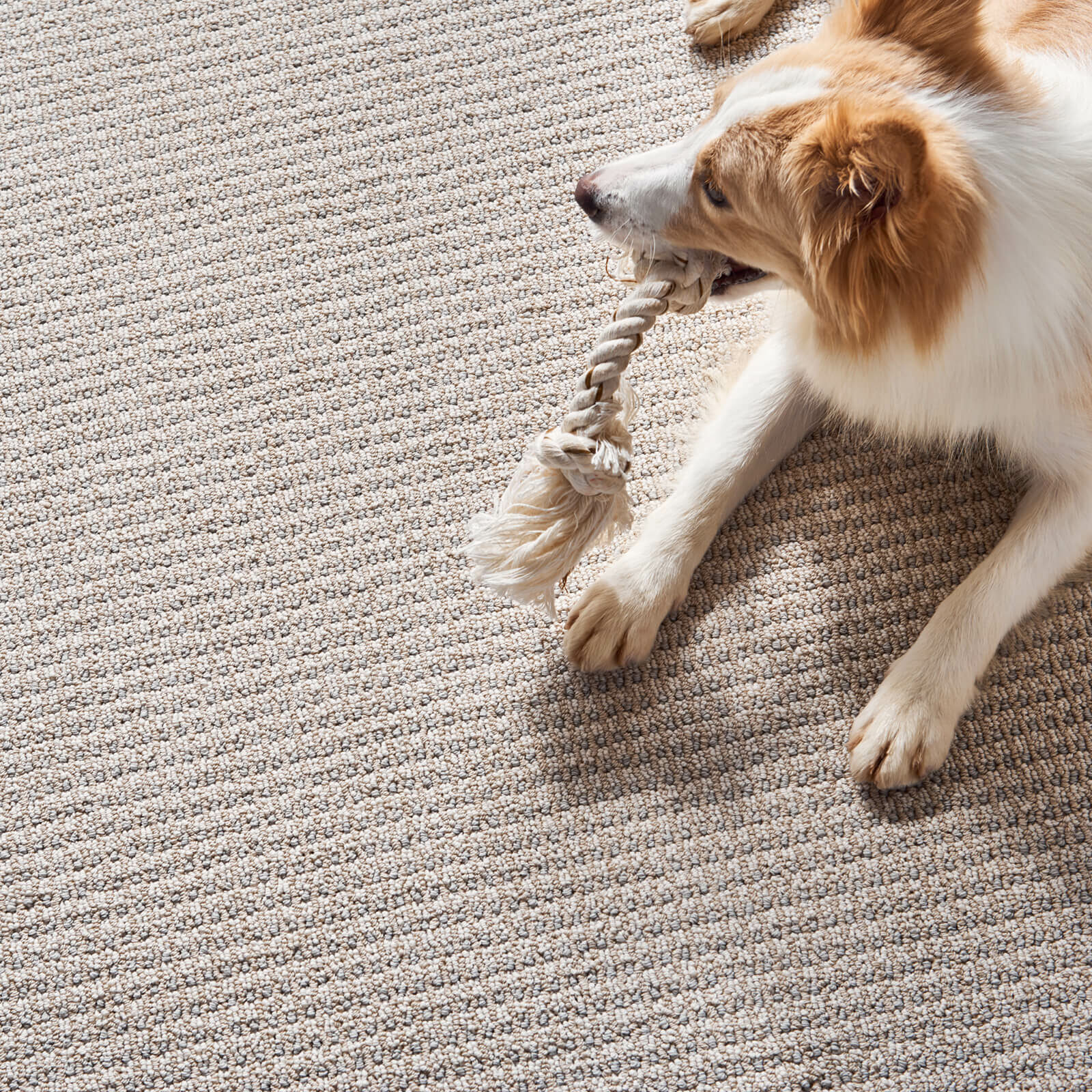 Pet friendly floor | Roberts Carpet & Fine Floors